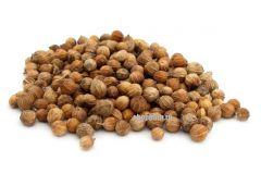 Кориандр в зернах